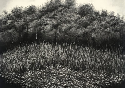 Secret Forest by Sorca O'Farrell